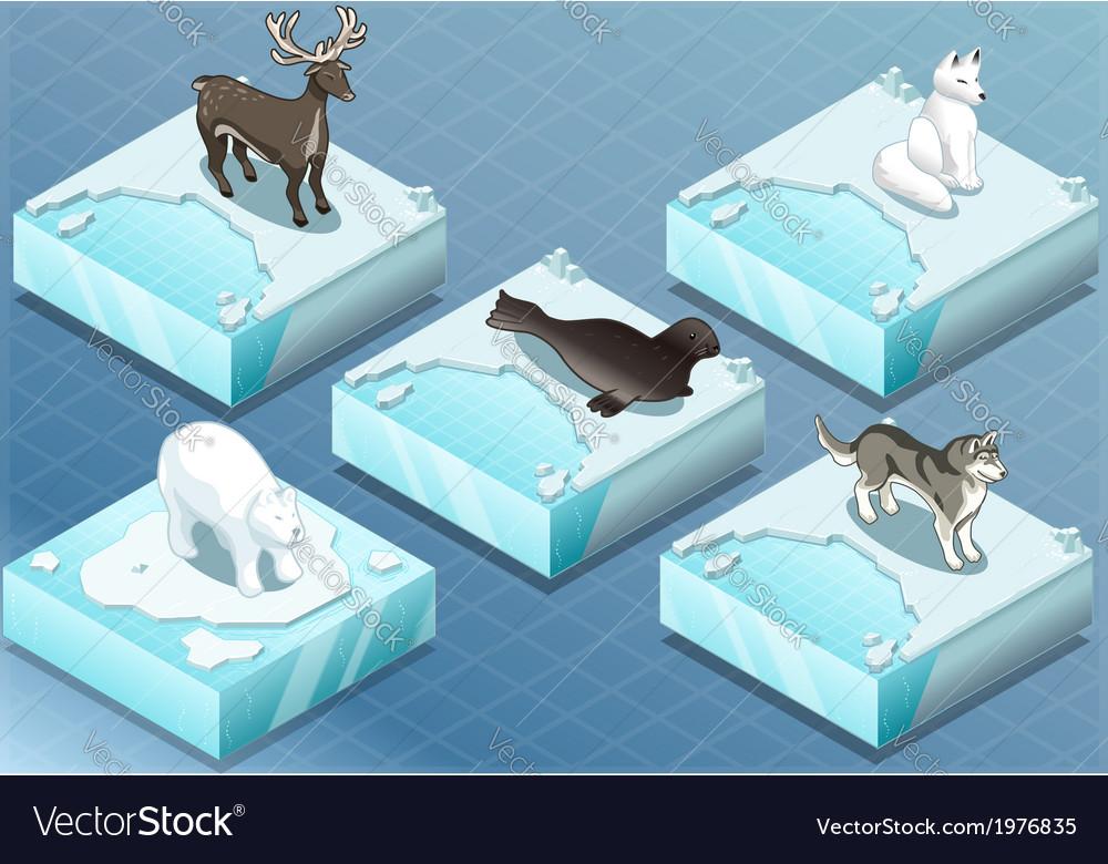 Isometric arctic animals on ice vector