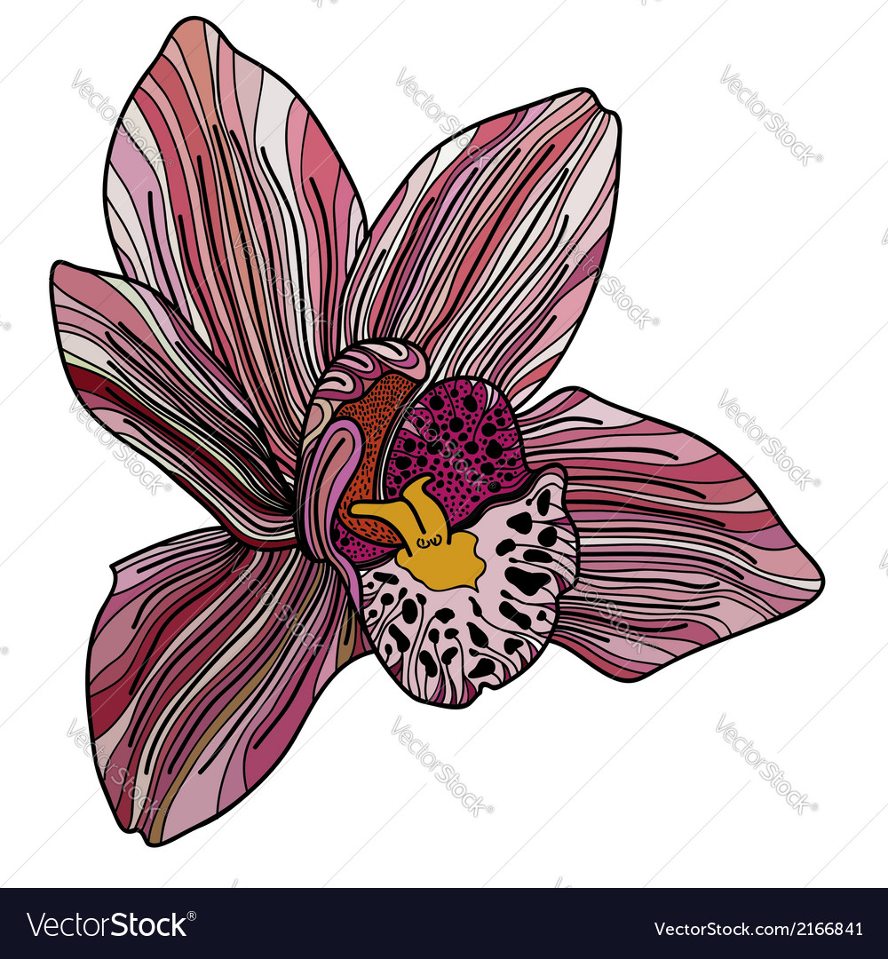 Exotic orchid painted in pink colors vector