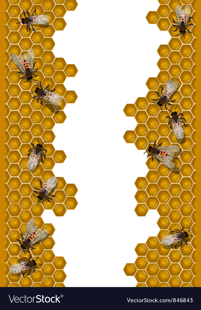 Bees working frame vector
