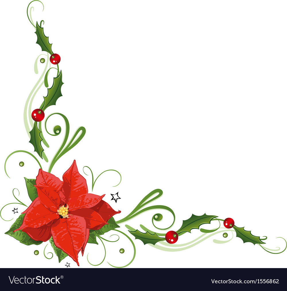 Poinsettia holly vector