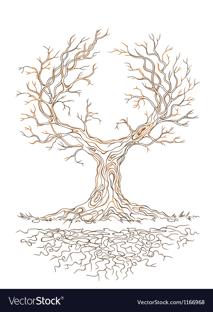 Graphic old branchy tree vector