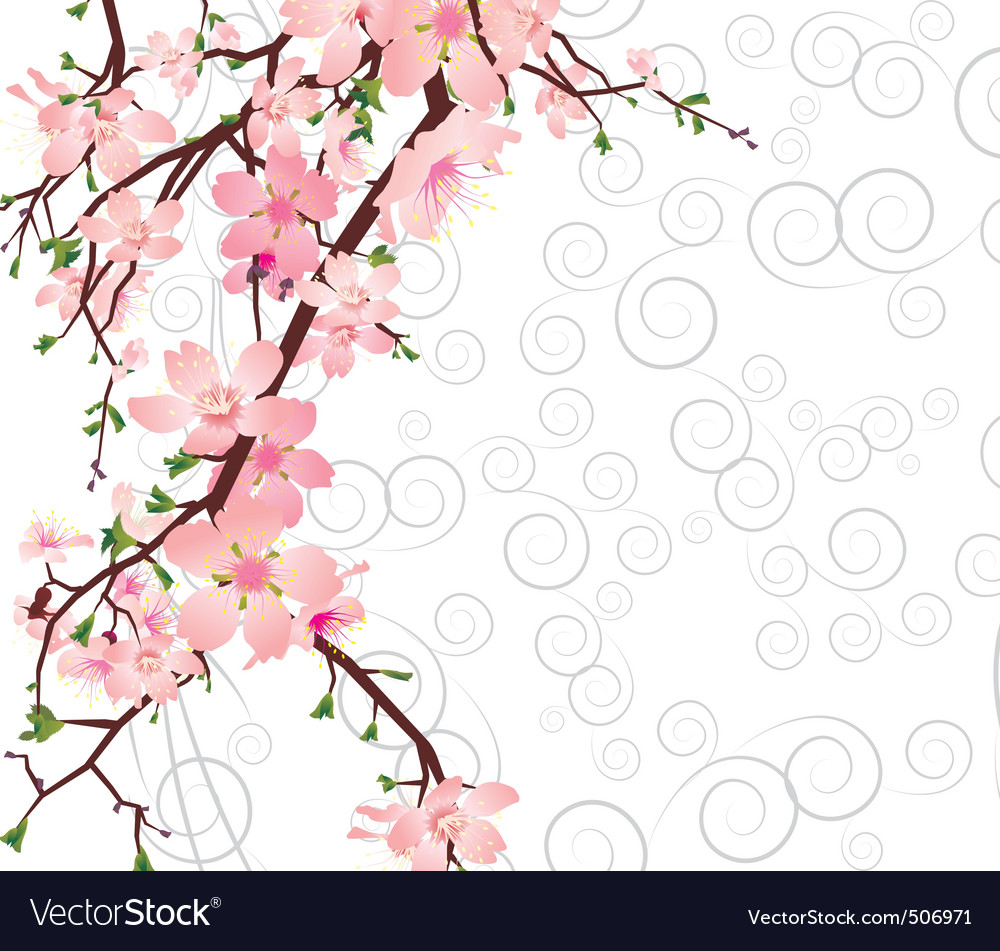 sakura branch on ornate background vector