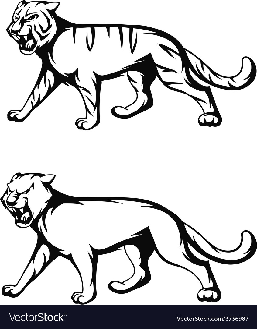 Tiger and panther vector