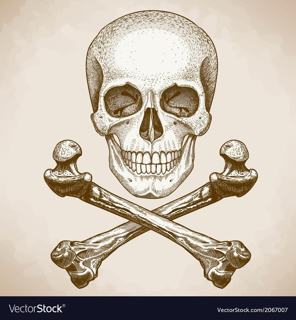 Engraving skull and bones retro style vector