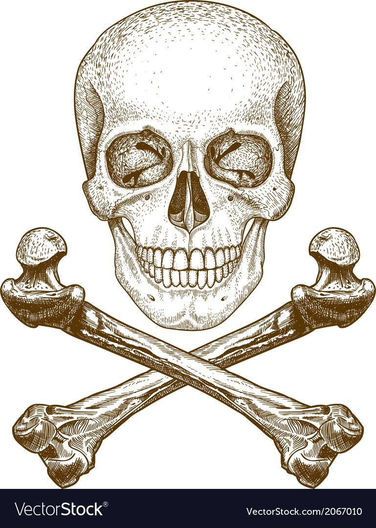 Engraving skull and bones vector