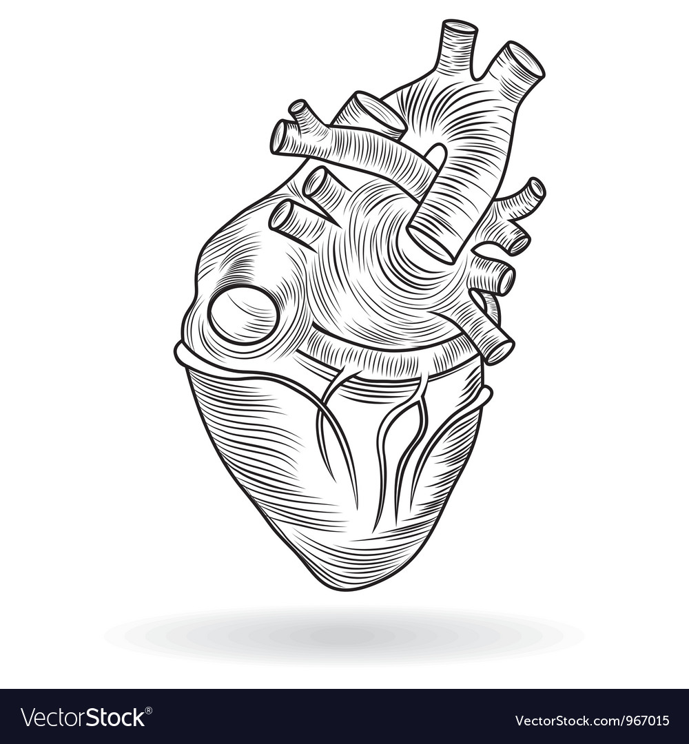 Button or icon of a human heart vector