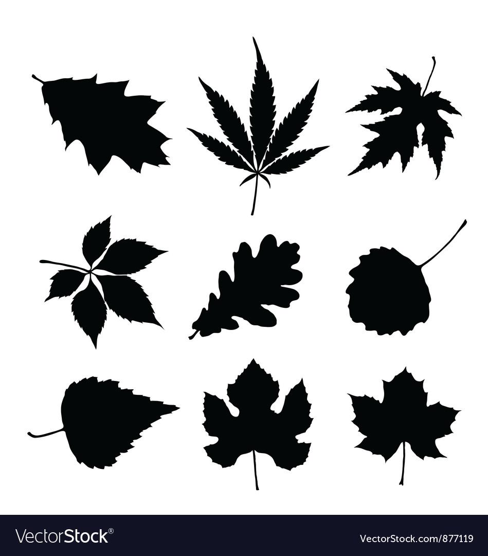 Leaf silhouette set vector