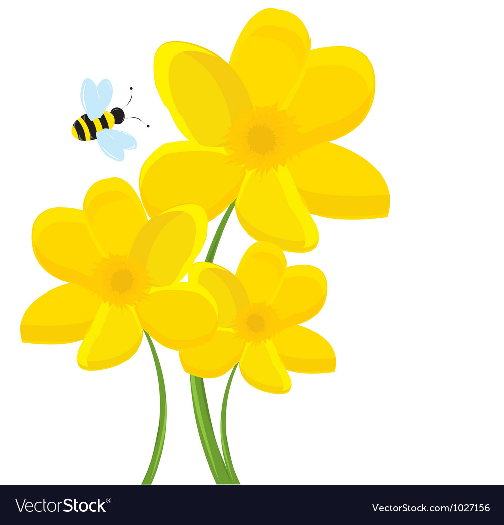 Cartoon daffodil vector