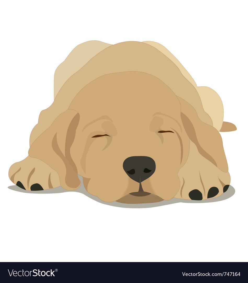 Sleepy labrador puppy vector