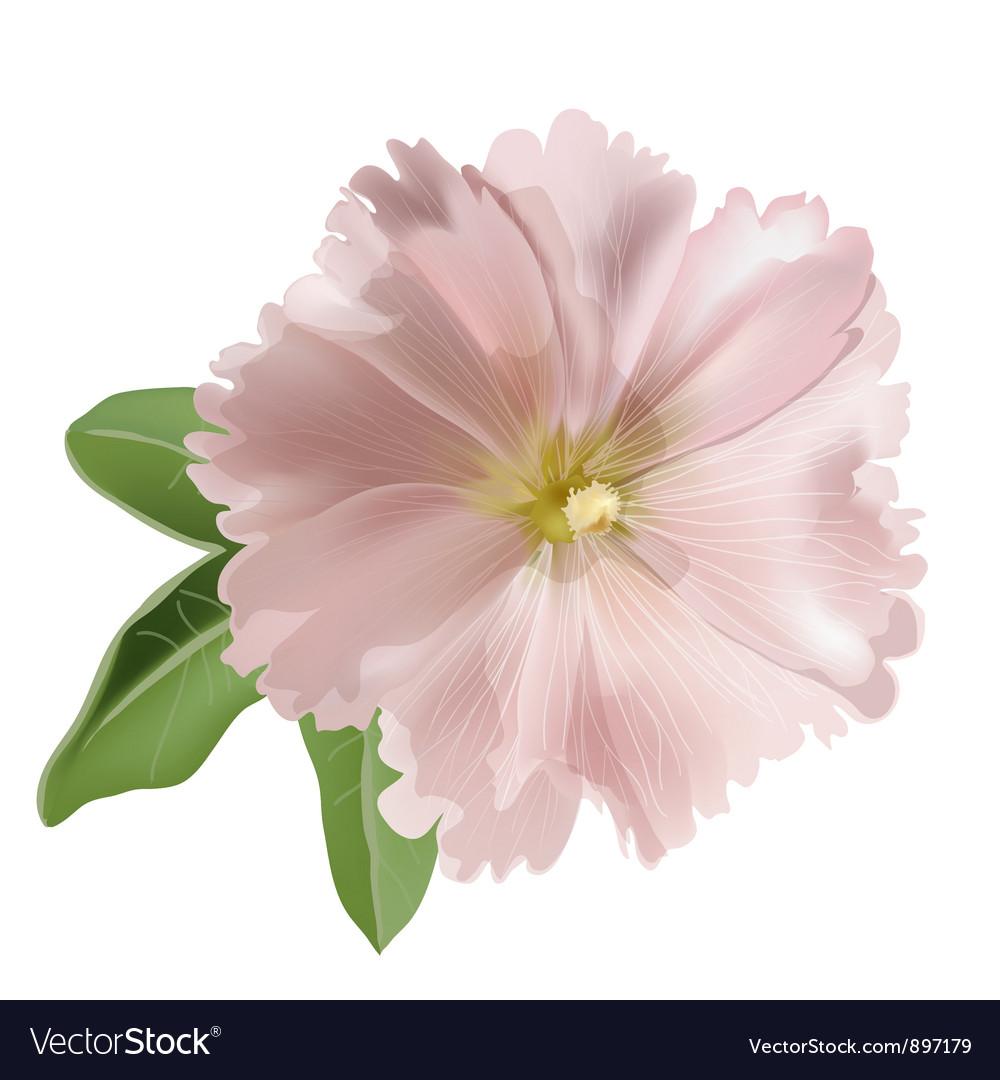 Pink mallow flower vector