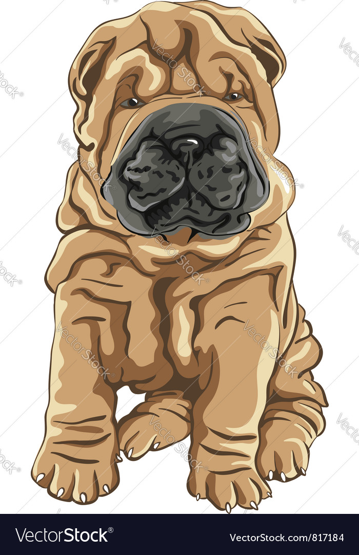 Cute red shar pei dog puppy smiles vector