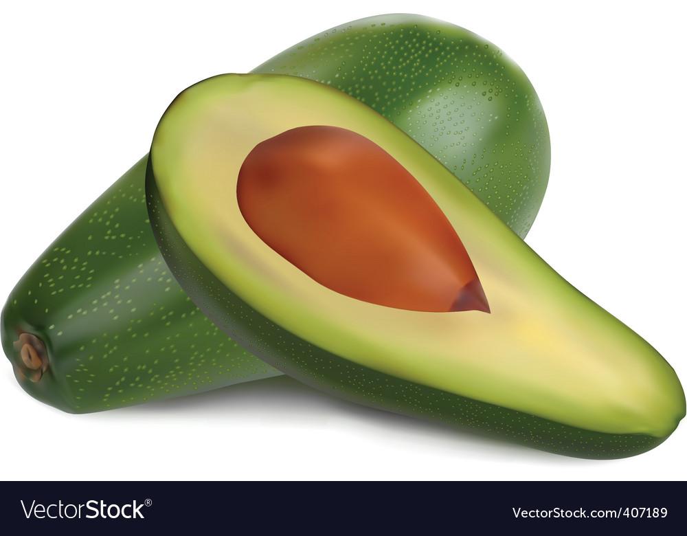 Ripe avocado vector