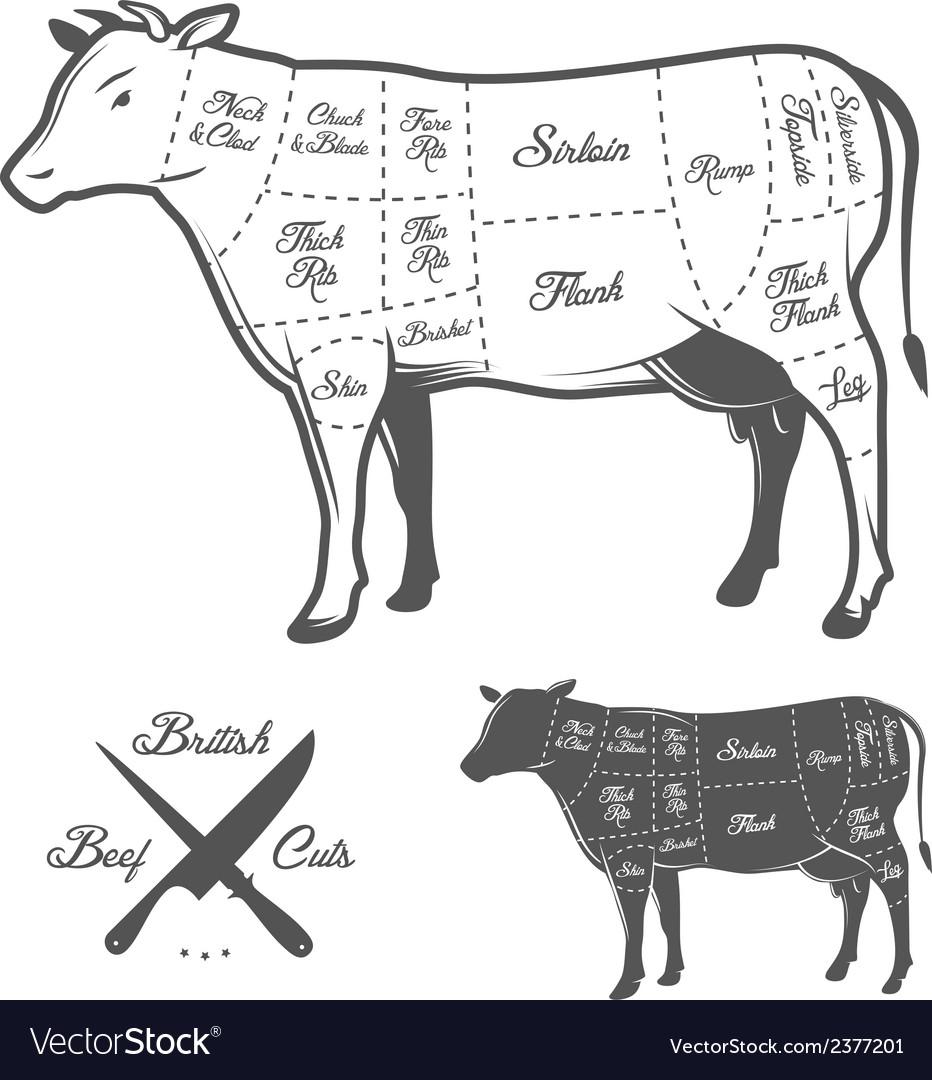 British butcher cuts of beef diagram vector
