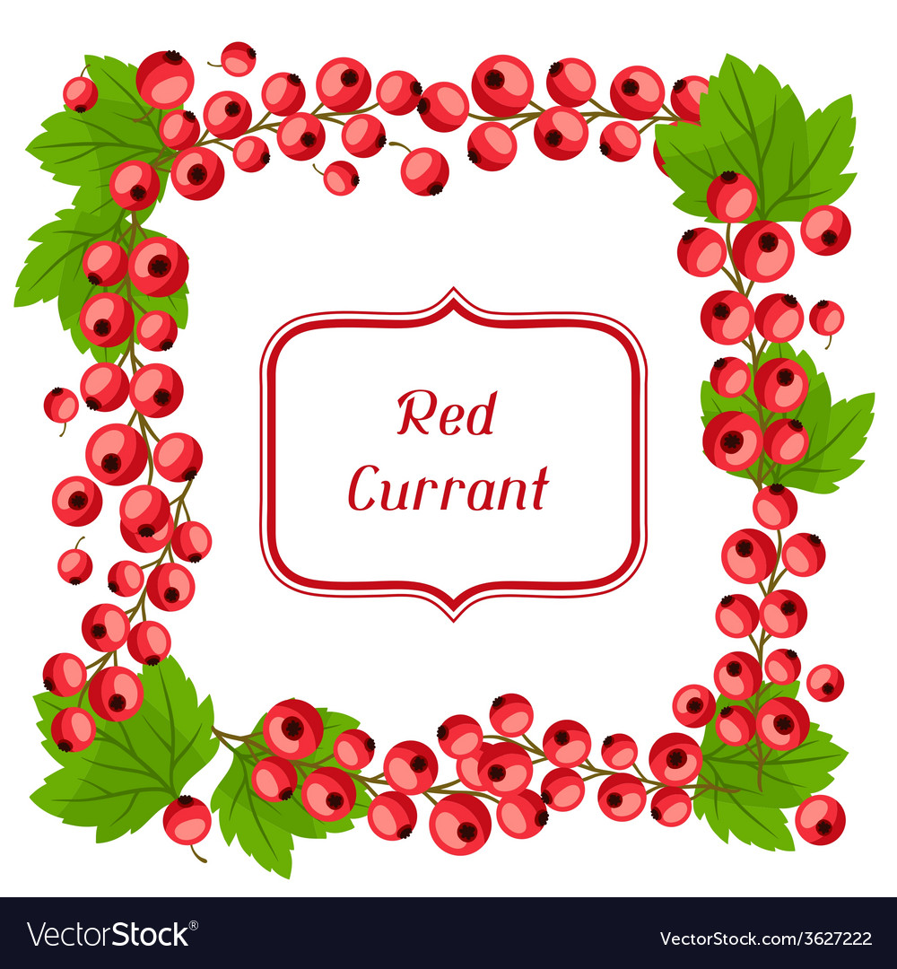 Nature background design with red currants vector