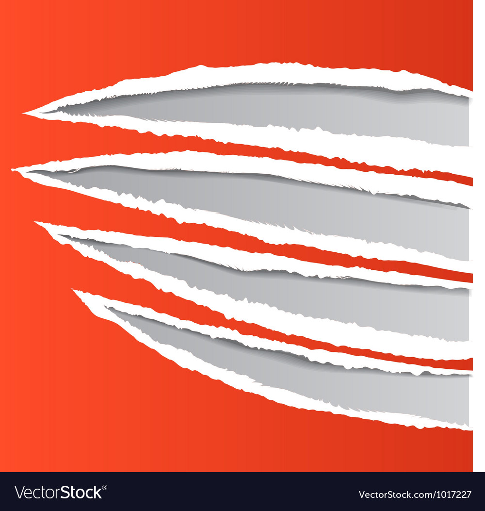 Traces of an animal claws on paper vector