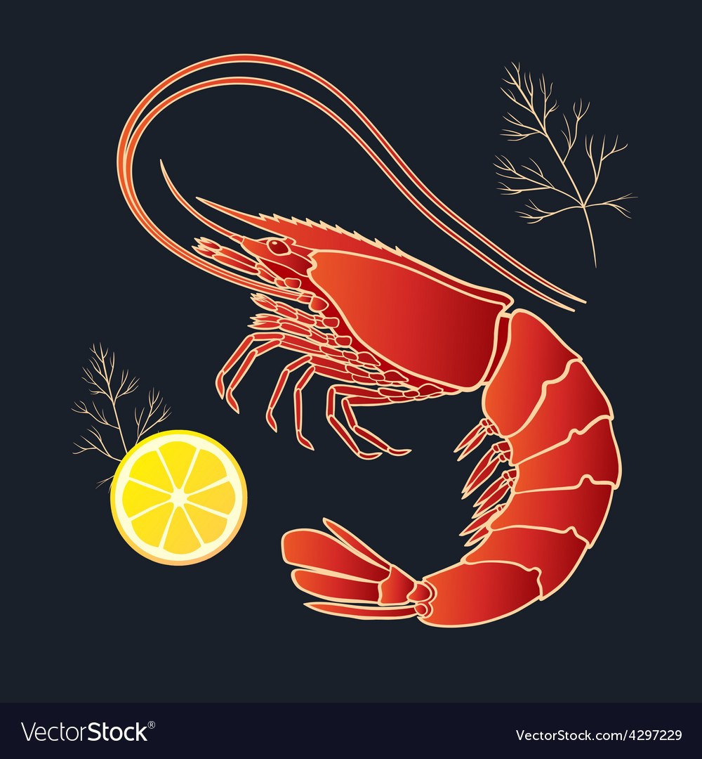 Shrimp with lemon and dill vector
