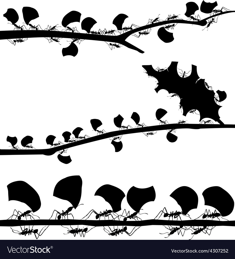 Leaf cutter ant foregrounds vector