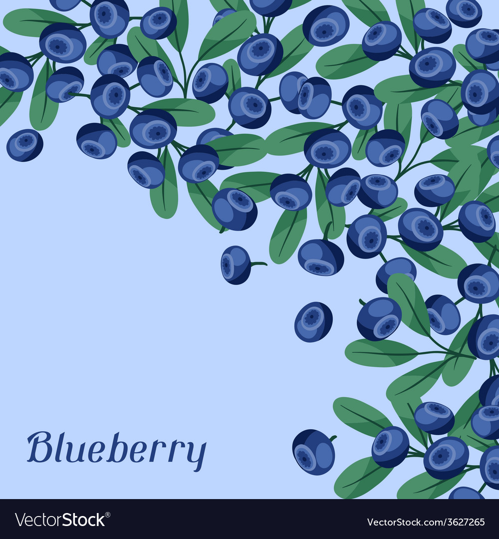 Nature background design with blueberries vector