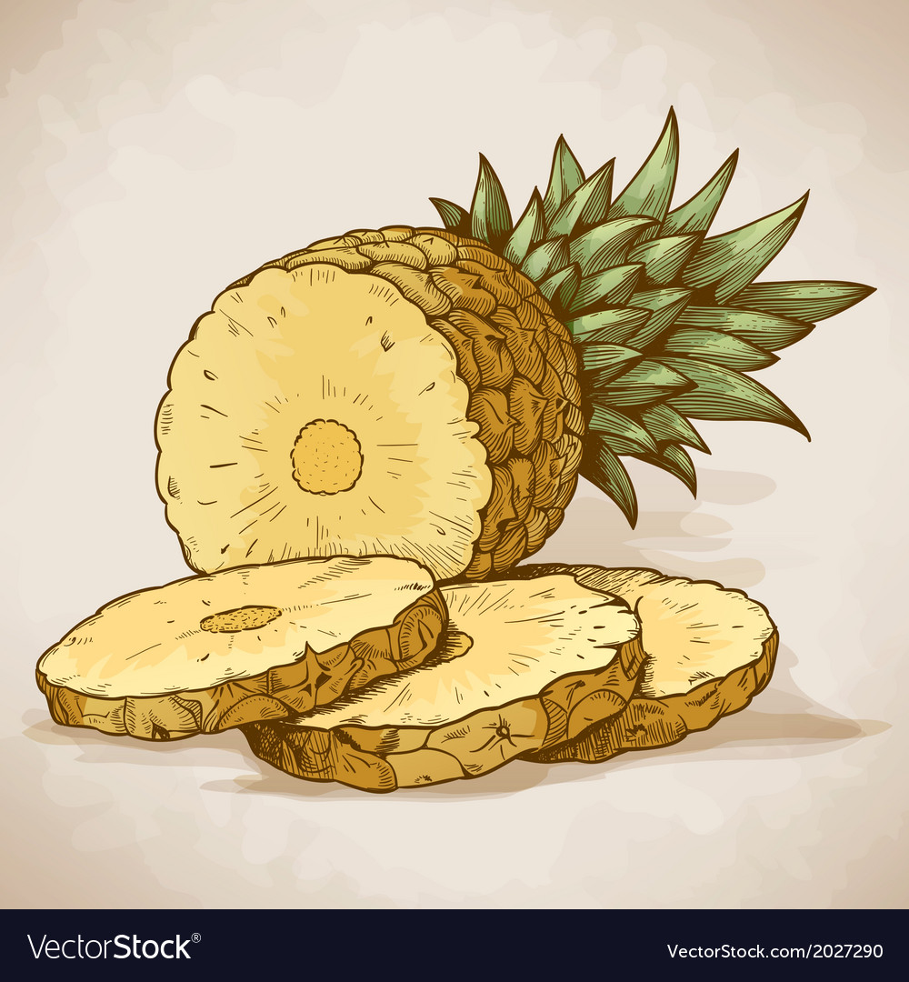 Engraving pineapple slices in retro style vector