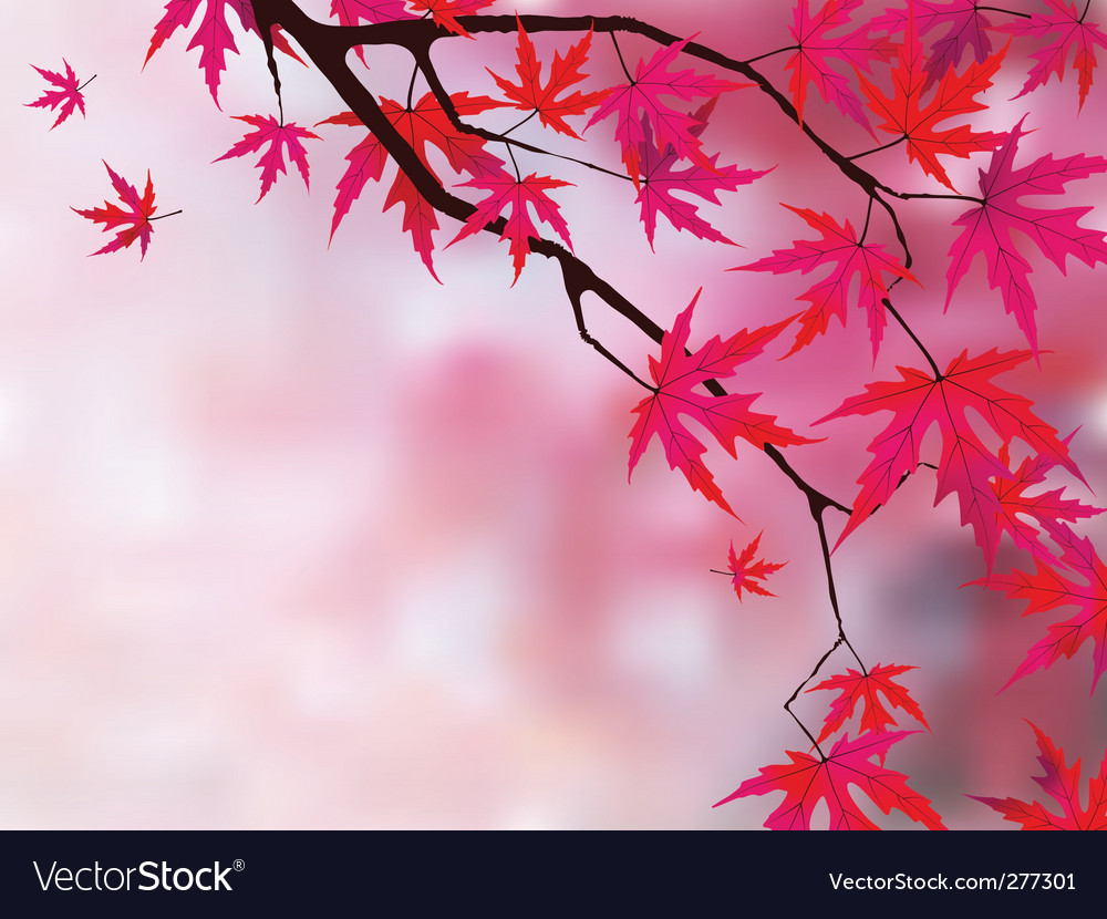 Japanese maple vector