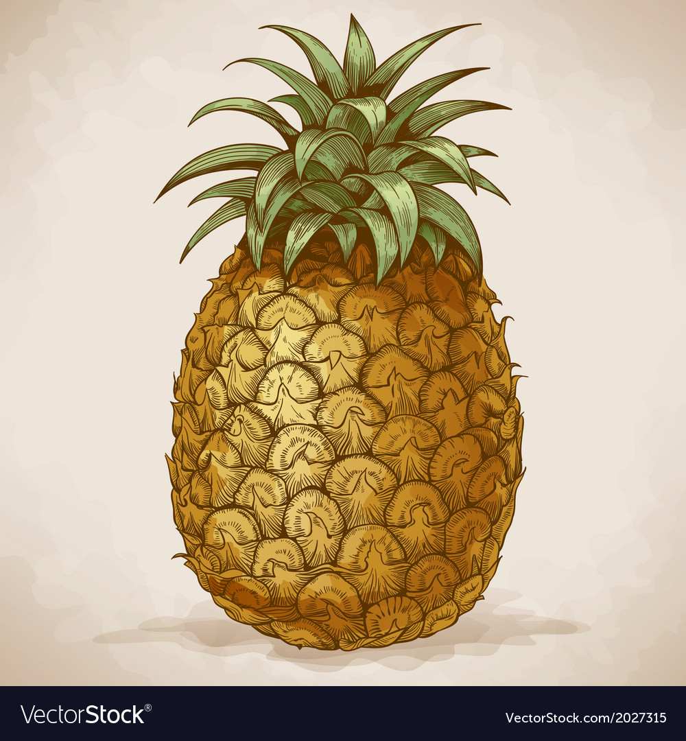 Engraving pineapple retro style vector