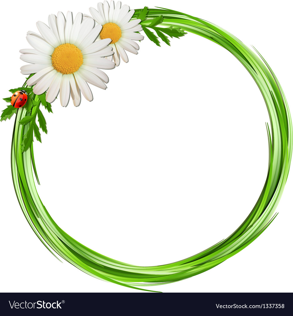 Grass frame with daisy flowers and ladybug vector