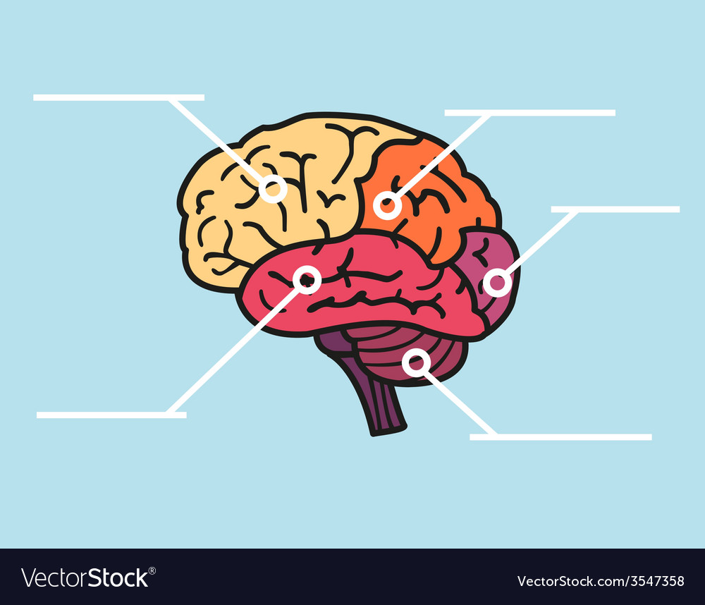 Map of brain with copyspace title vector