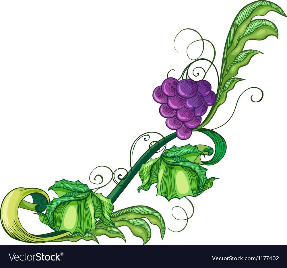 A vine fruit vector