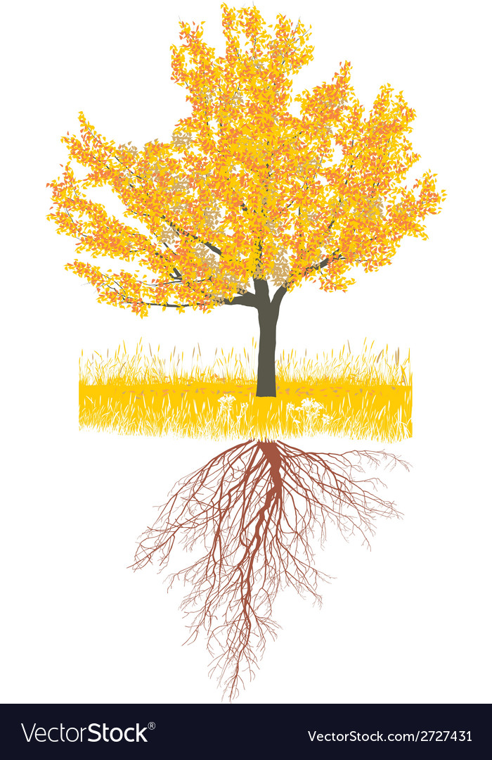 Cherry tree in autumn with roots vector