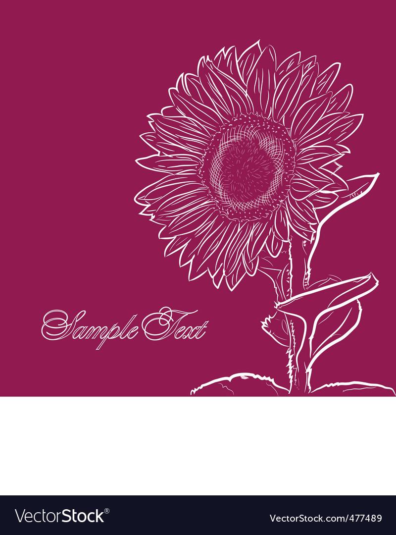 Sunflower vector