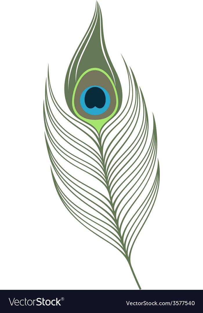 Feather peacock vector