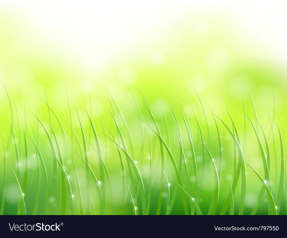 Morning sunlight grass vector