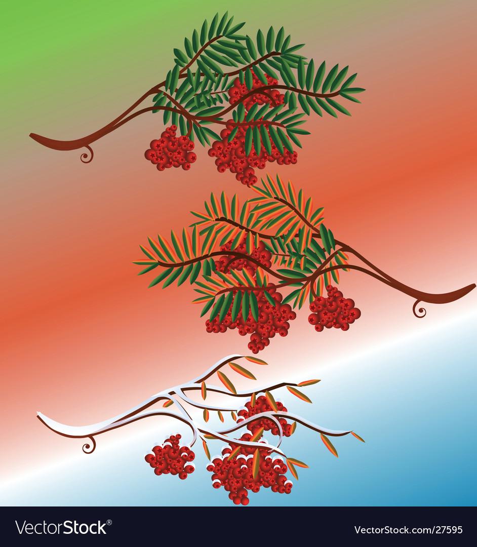 Rowanberry in seasons vector