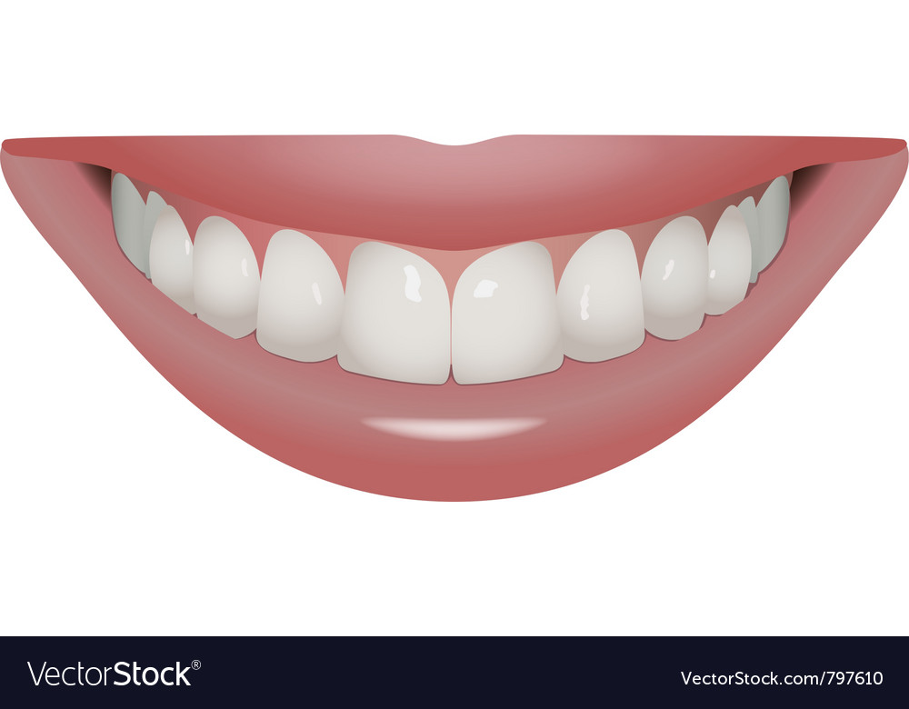 Perfect smile vector