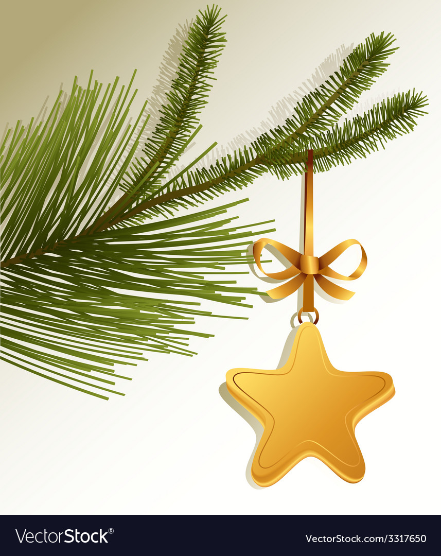 Christmas tree branch with gold star vector