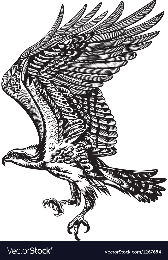 Wild predatory bird vector