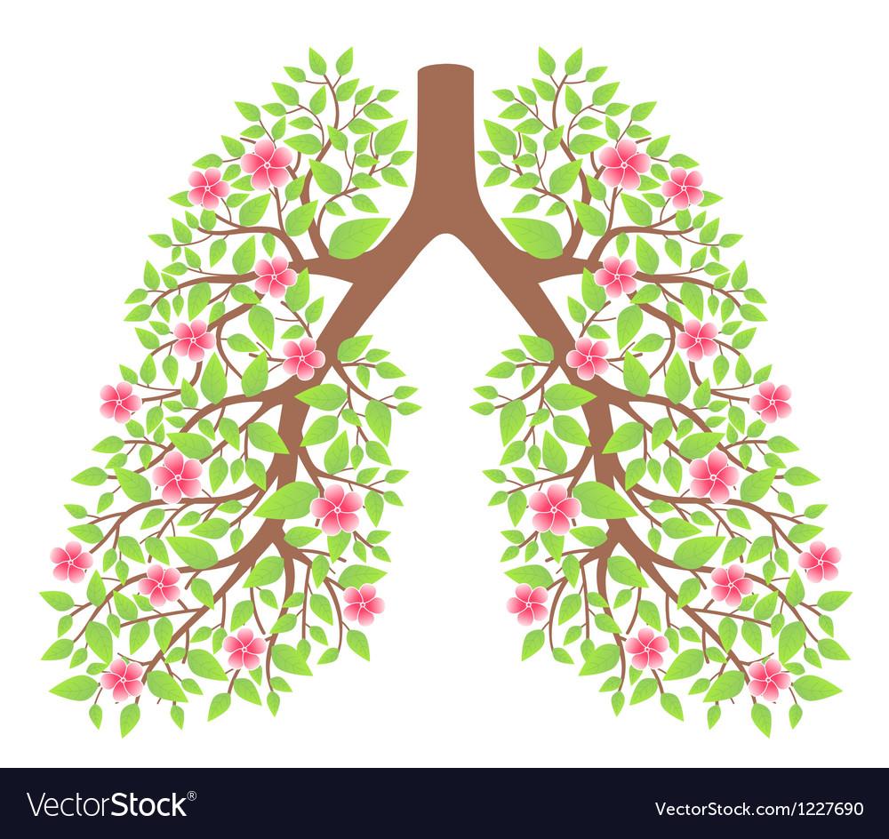 Lungs healthy vector