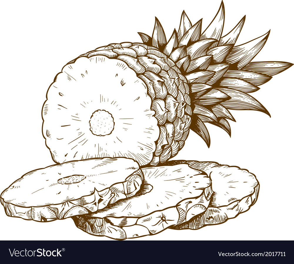 Engraving pineapple slices vector