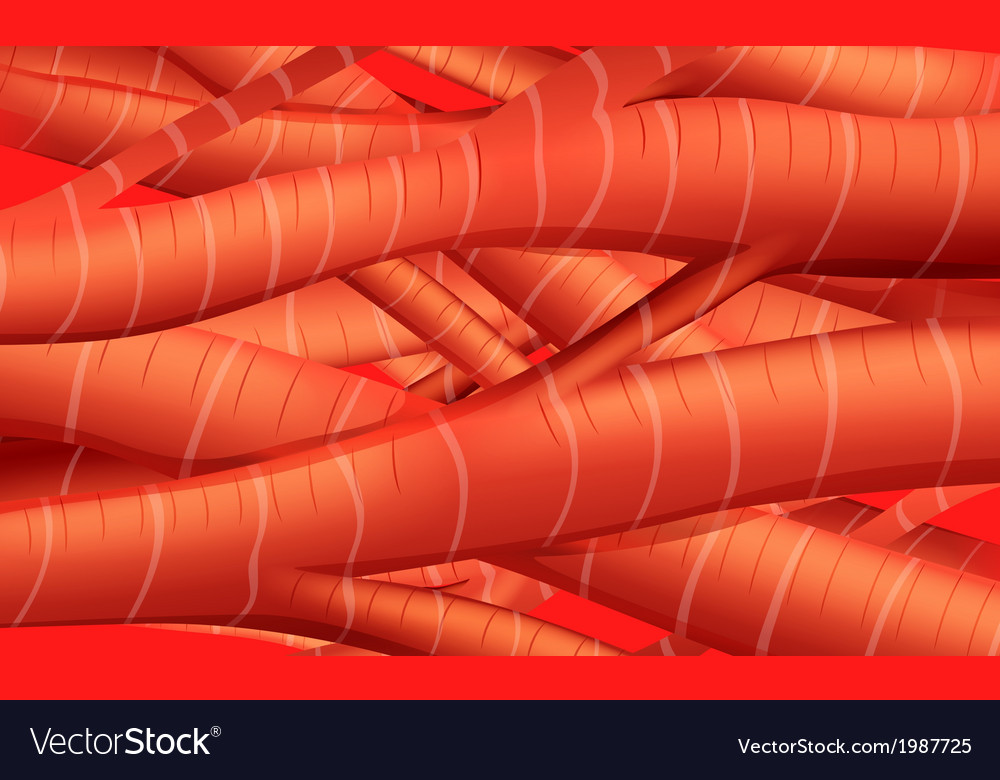 Muscle tissues vector