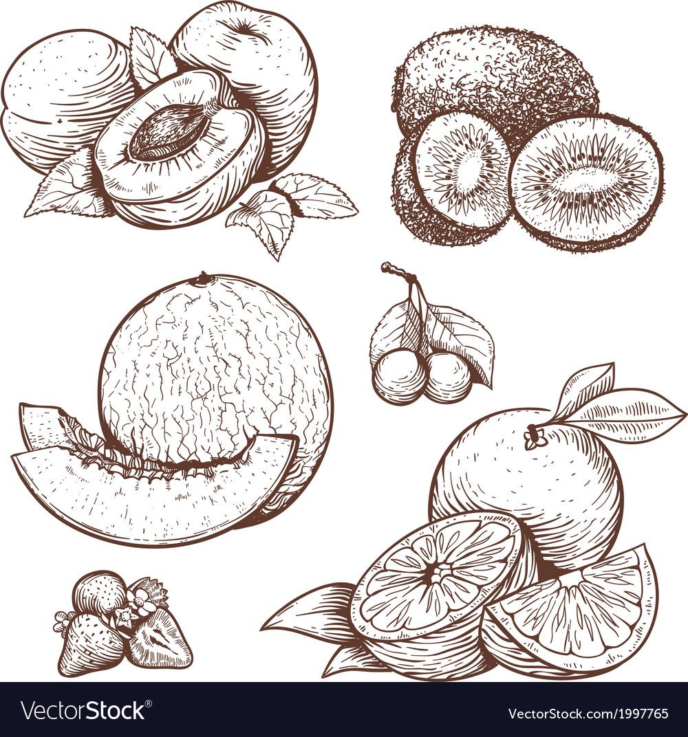 Engraving fruits vector