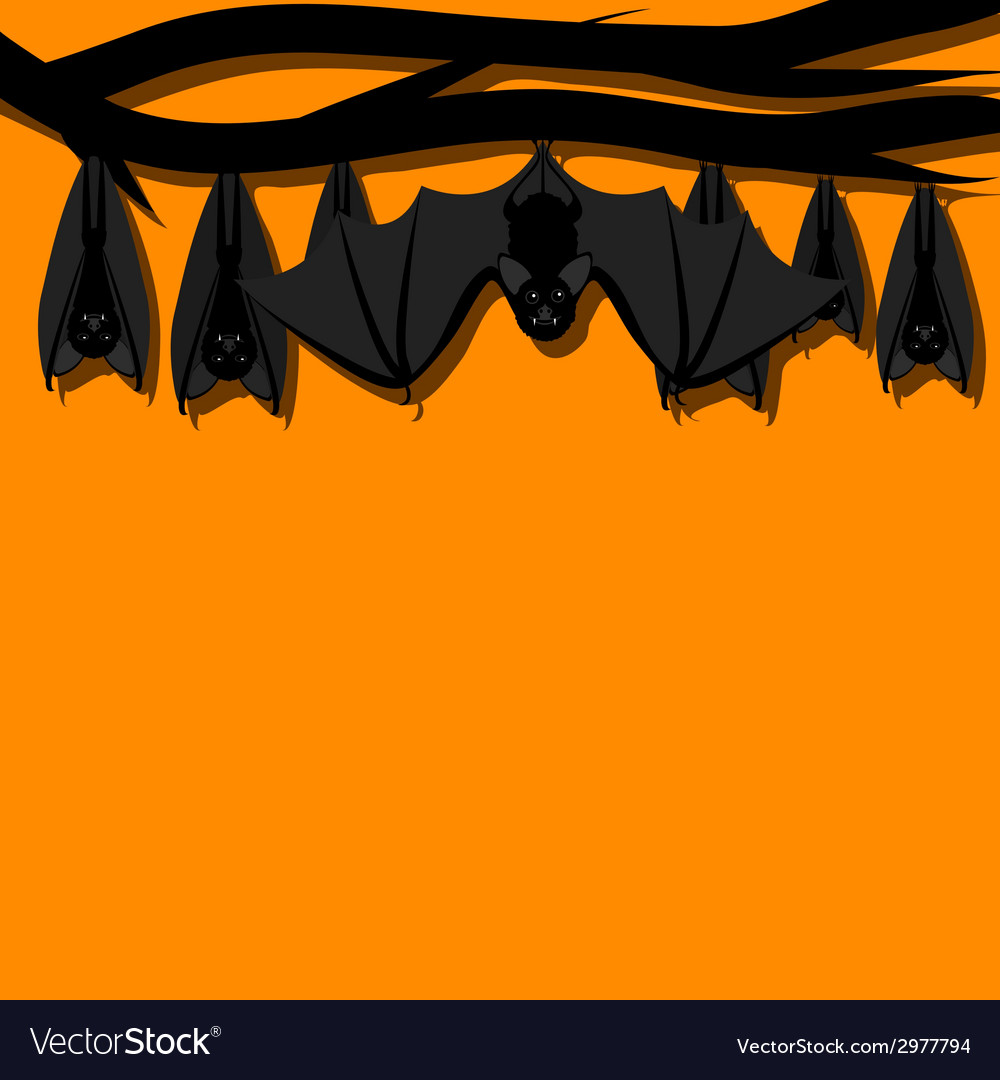 Hanging bats vector