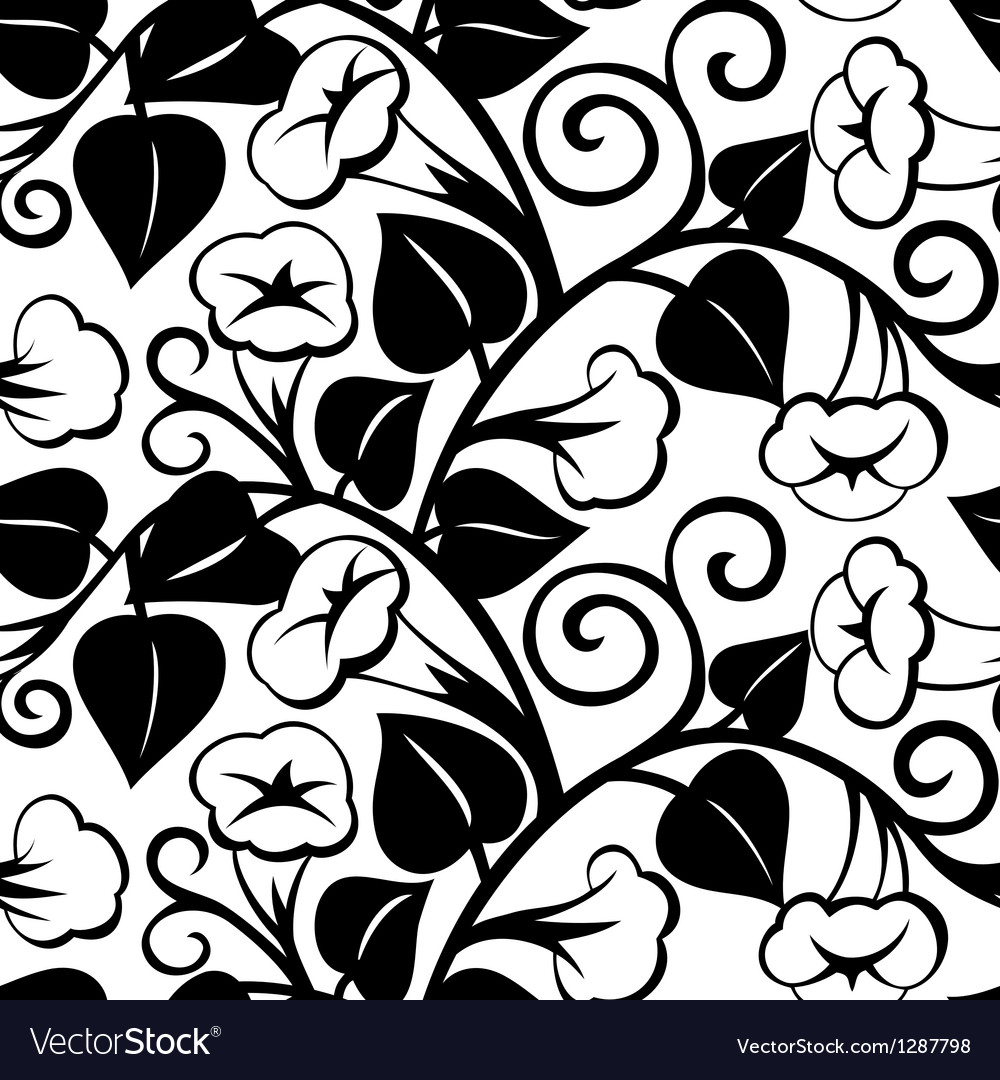 Seamless morning-glory black isolated background vector