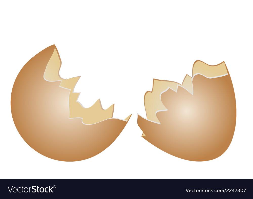 Egg shell vector