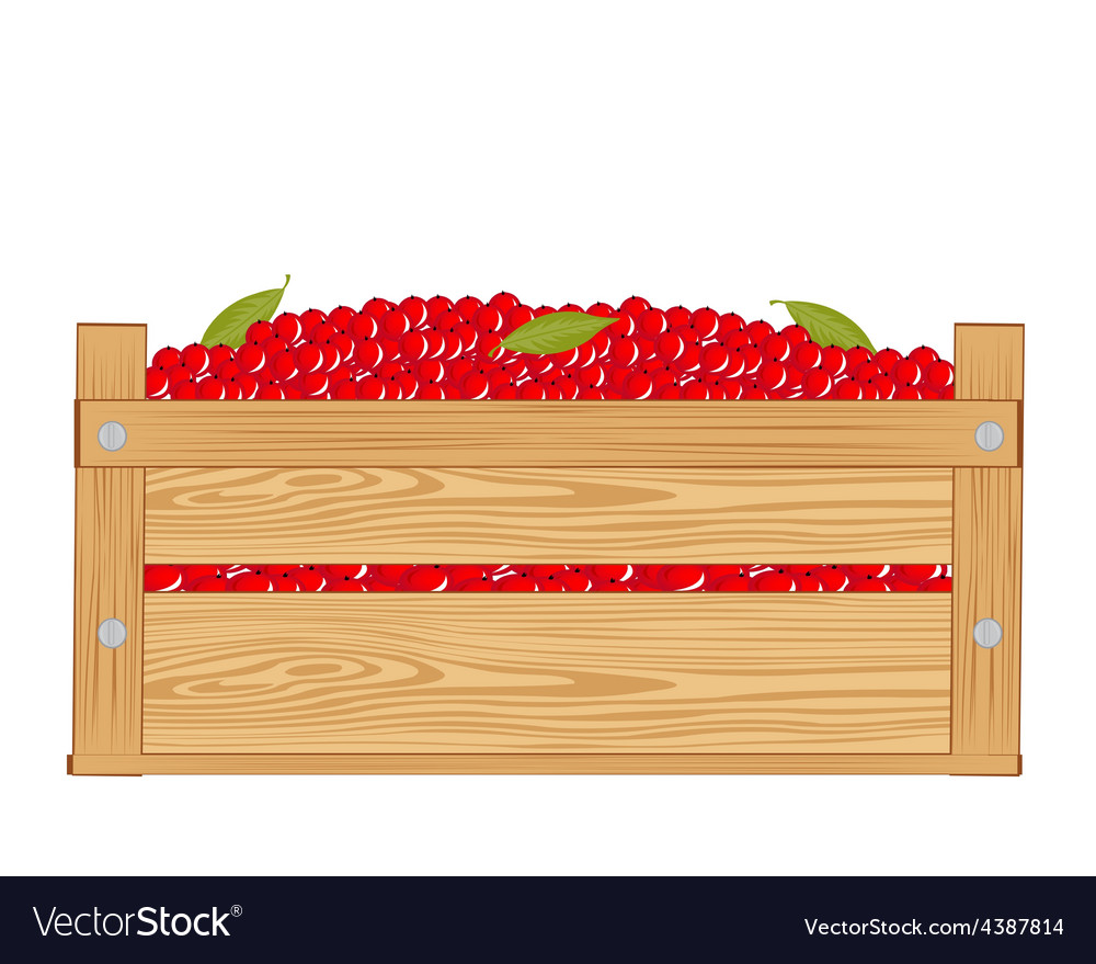 Box with red berry vector