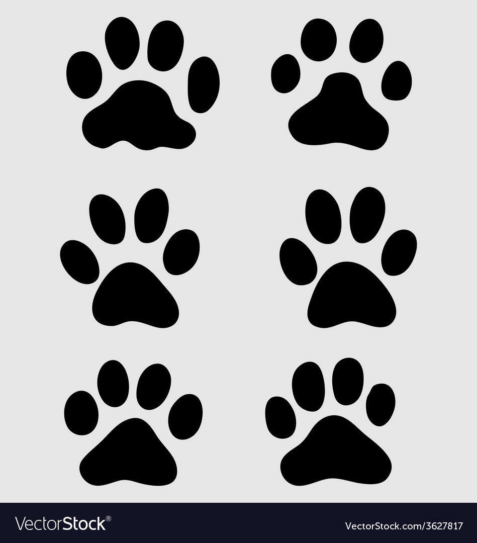 Paws of cats vector