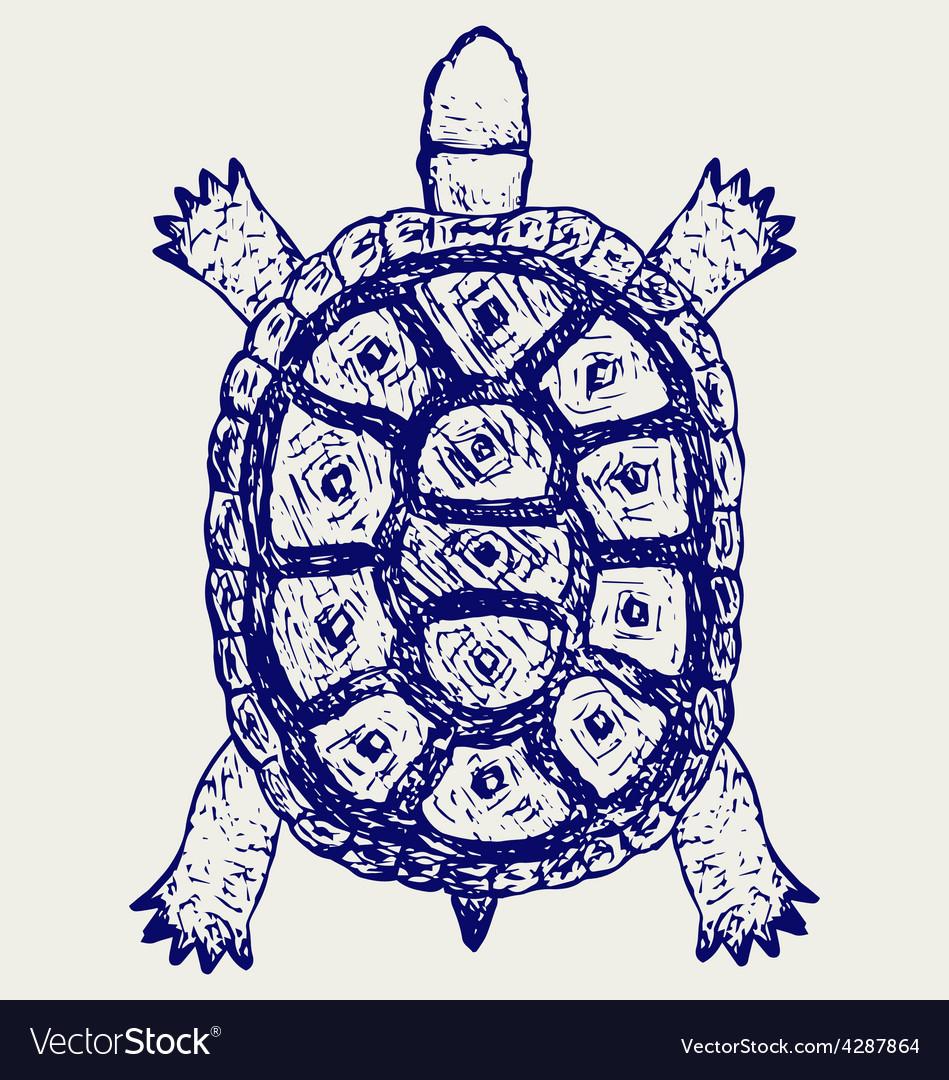 Land turtle vector