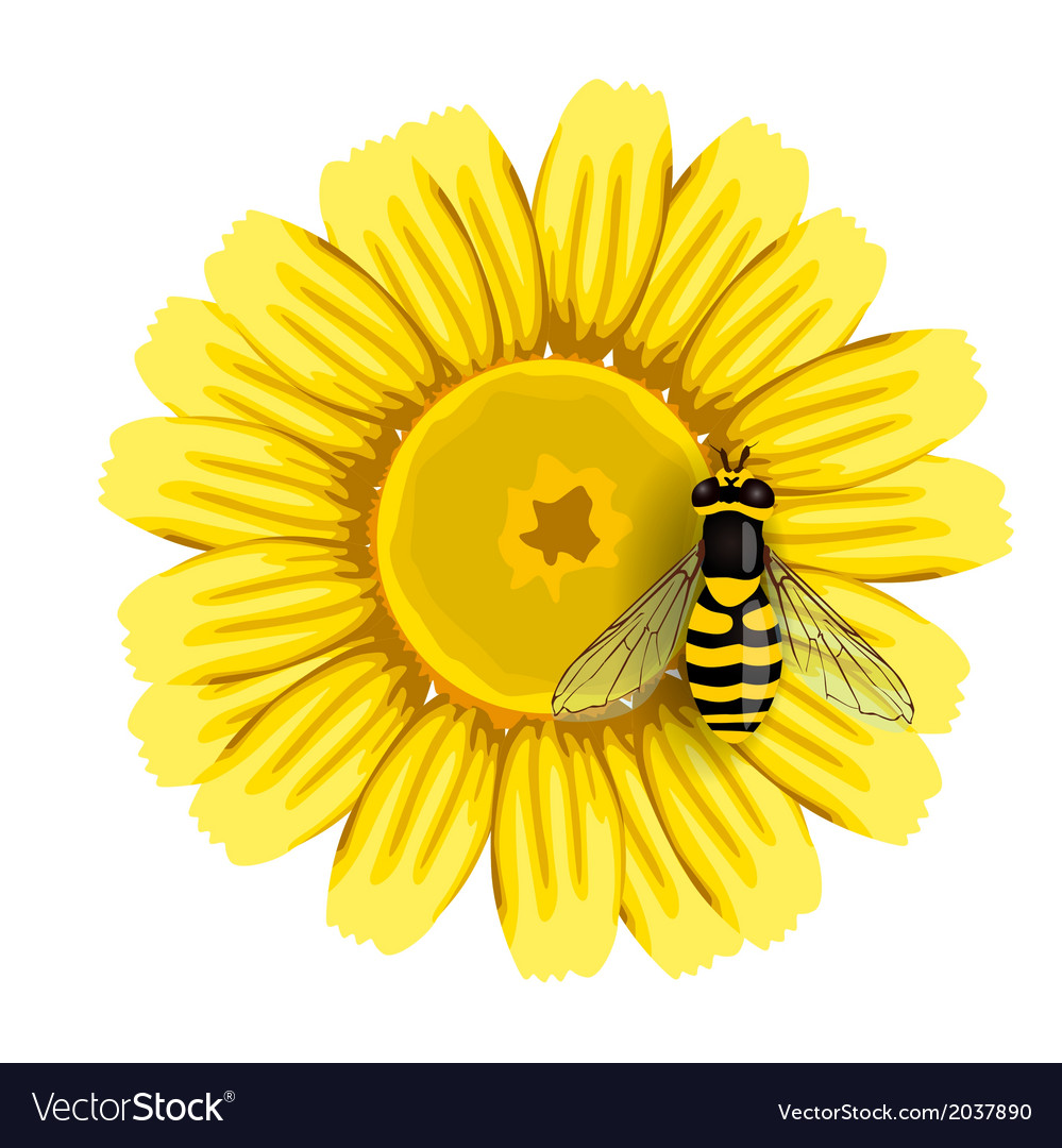 Bee and sunflower vector