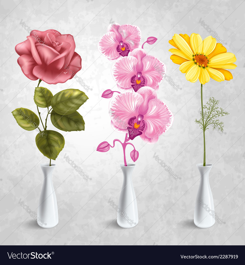 Flowers in the vases vector