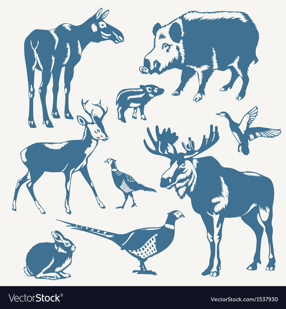 Wild animals vector