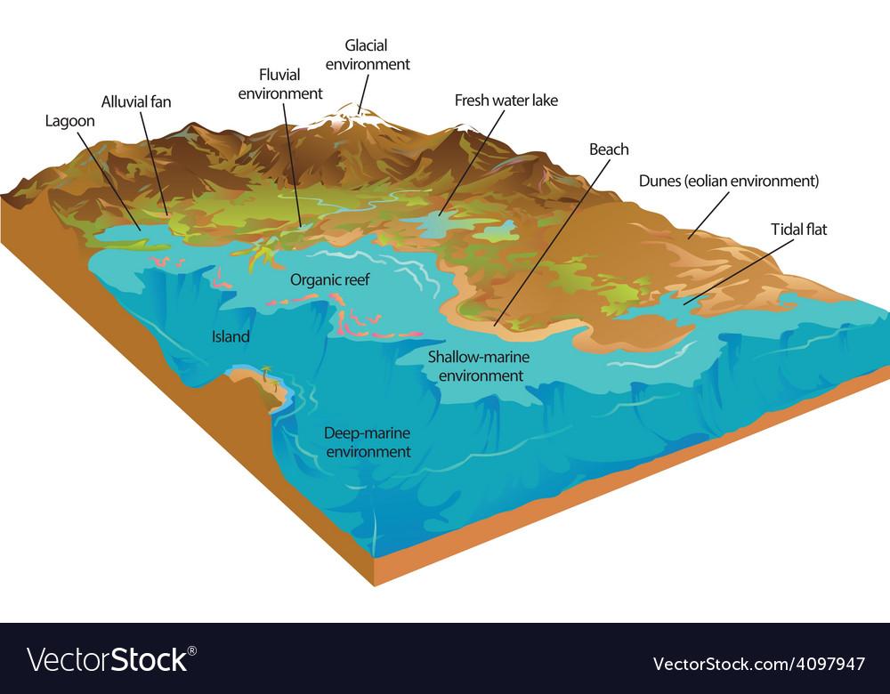 Coastal environment vector